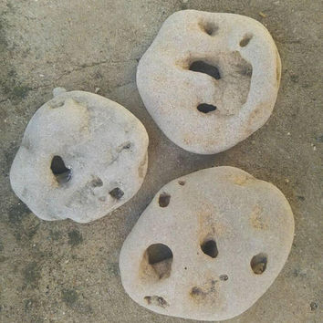 3pcs. Large Holey Stones with Multiple Hole. Wiccan Hag Stone. Pagan Altar Deco. Metaphysical Stone. Mystical Beach Rock. Art and Crafts