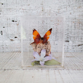 Vintage Butterfly in Plexi Glass Framed Real Butterfly Art Vintage Taxidermy Bug Display Case Butterfly Terrarium Display Mid Century Art