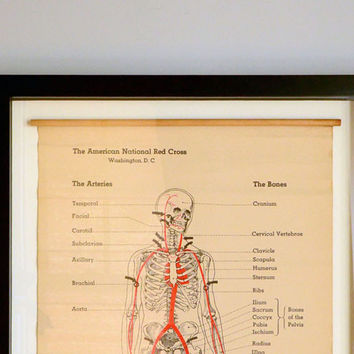Vintage Red Cross Skeleton Chart