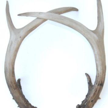 Antlers: Shed - Natural Color