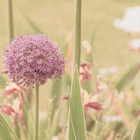Dreaming of Spring fine art photo print, dreamy light, soft pastel, spring home decor, gifts for her, wall art for home office or dorm