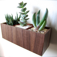 "Wall Hanging Planter (8""), Plant Holder for Succulents, Cacti or Air Plants in WALNUT wood, roughly 8""x3""x3"", air plants sold separately"