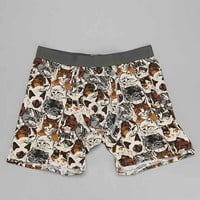 Wallpaper Cats Boxer