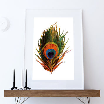 Vintage Peacock Feather Print Vintage Bird Prints Illustrated Bird Print Bird Wall Decor Natural History Wall Art