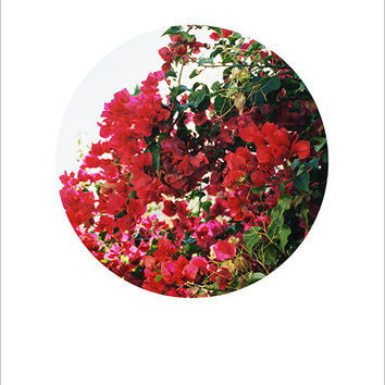 Kate Miss Prints — Bougainvillea Circle