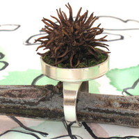 Sweet Gum Ball Ring with Moss, Moss Ring, Moss Jewelry, Earth Day Jewelry, Earth Day, Eco Friendly, Terrarium, Mothers Day Ring