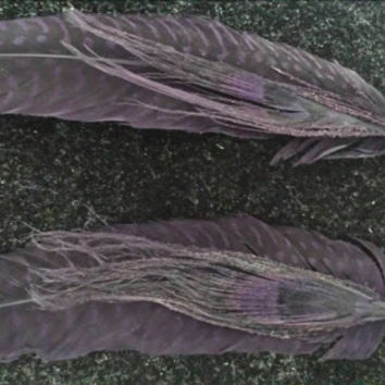 Raven black feather earrongs