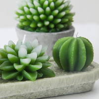 Succulent Candle from Apollo Box