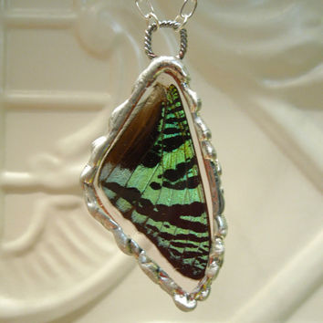 Real Butterfly Wing Pendant   Madagascan Sunset by workofwhimsy