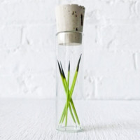 Neon Green Porcupine Quills in Glass Cork Vial