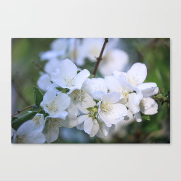 Hawthorne Flowers After Rain Canvas Print by Theresa Campbell D'August Art
