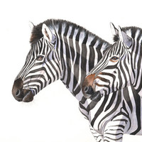 Zebras watercolor painting animal art PRINT of watercolor painting 5 by 7 size