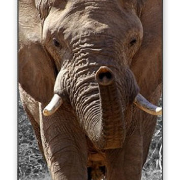 Wild Exotic African Elephant in Water Iphone 4 Quality TPU Soft Rubber Case for Iphone 4 - AT&T Sprint Verizon - White Case