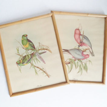 Vintage J Gould bird Prints Natural History Lithographs Home Decor Art Wall Hangings Framed Collectibles