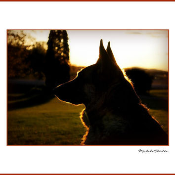 German Shepherd Photography  german shepherd silhouette,sunset,copper,animal lovers,summer,dog lovers gift idea,golden,beautiful shepherd