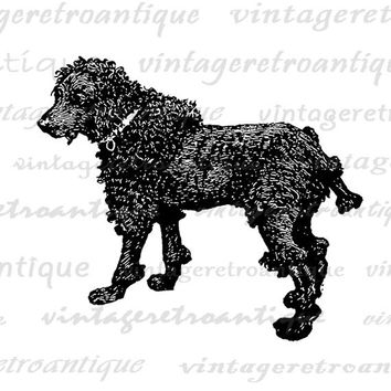 Dog Antique Image Graphic Download Digital Printable Vintage Clip Art for Transfers Printing etc HQ 300dpi No.357