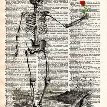Skeleton with rose, vintage anatomy, vintage skelton illustration