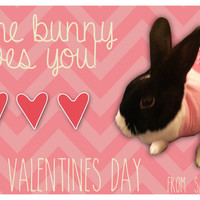 Valentine's Day card I made featuring my bun bun Oreo!