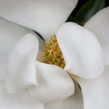 White Magnolia Photography - White Flower Art - Cottage Chic Home Decor