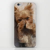 Duke the Yorkie Dog iPhone & iPod Skin by ATXperspective
