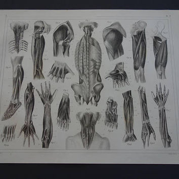 MUSCLES antique anatomy print 1849 old anatomical poster with vintage pictures of arms hand muscle leg foot shoulder illustration myologia