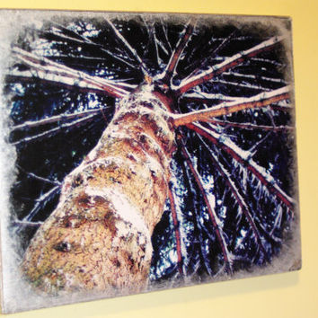 8 X 10 Photograph On Canvas of Winter Pine Tree