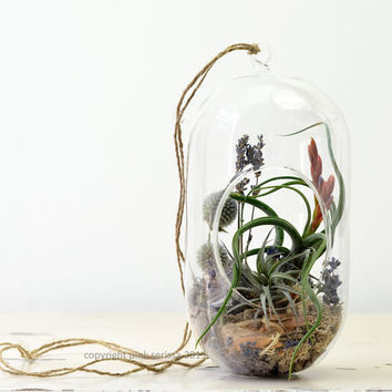 Air Plant Terrarium// Hanging Terrarium// Tall Glass Orb// Lavender// Living Home Decor