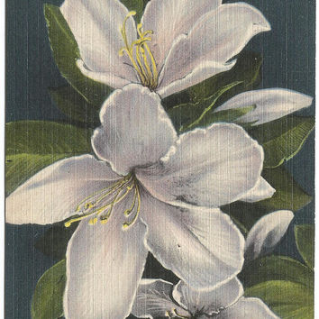 Orchid (Agaleas) from Florida Florida Cypress Gardens Vintage Postcard Vintage Linen Postcard Old Postcard >50 Years Old