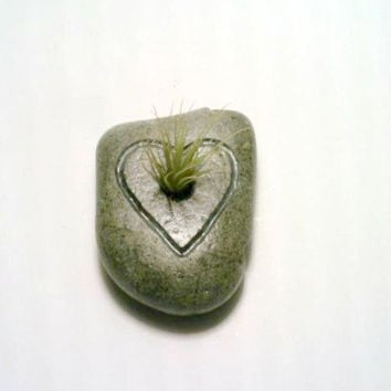 Engraved Rock, Air Plant Holder, Stone Paperweight,  Natural Tillandsia Holder, Eco Friendly