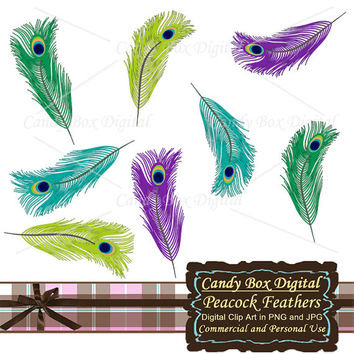 Feather Clipart, Peacock Feather Clipart, feather clip art, peacock feather clip art, feather digital, feather graphics - Commercial Use OK