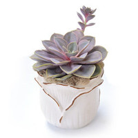 Shop 1.0 QT DROP-IN ROSEBD CACTUS/SUCC at Lowes.com