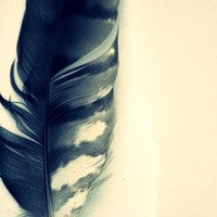 To Write The Story - 8x10 Fine Art Photography - Dreamy Feather Portrait - Featured on HGTV.com, Style at Home Magazine