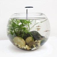 "Nature's Pure Glass Aquarium Sphere 12"" Dia x 10"" Height, 2.75 Gallons."
