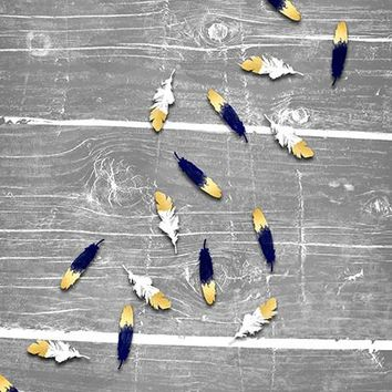 Birds of a Feather Photo Background / 1468