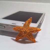 Real Starfish Dust Cap by byElizabethSwan on Etsy