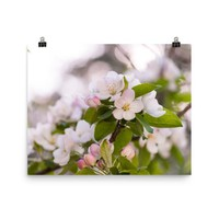 SPRING BLOSSOMS PRINT