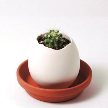 Grow Your Own Cactus In An Egg