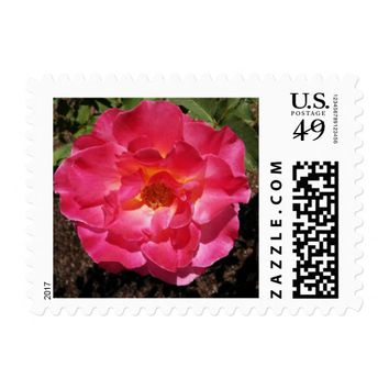 Hot Pink Rose Postage Stamps