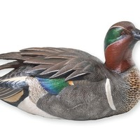Quarter Life Size Green Winged Drake Teal Waterfowl Sculpture