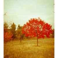 Autumn Photography - Red Tree - Fall Photography, Rustic Wall Decor, Crimson Red, Orange Leaves, Olive Green, Autumn colors
