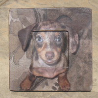 """Personalized Dog Picture Frame -  The Original & Unique """"Picture in Picture"""" Custom Pet Photo Frame 8"""" x 8"""""""