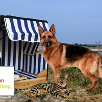 Wicker Beach Chair for Dogs and Cats, North Sea Design, Blue-White Striped