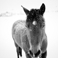 Horse in Snowflakes Art Print by Haley Lauren