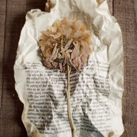 Still life, beige, flower photography, dried flower, book page, bedroom art, office decor, botanical art, rustic art,literary,fine art photo