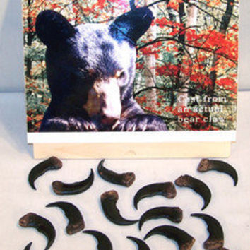 4 BULK SYTHENTIC GRIZZLY BEAR CLAW brown bears black animal claws LOT new items
