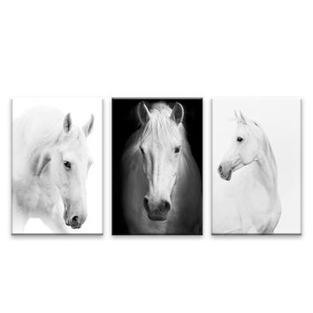 White Horse Wall Art Canvas Prints Modern Art Home Decor For Living Room