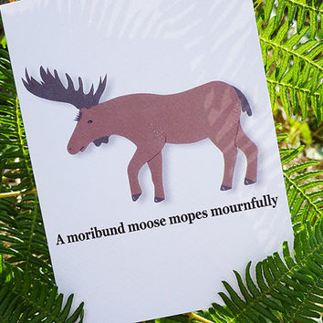 Animal card, moribund moose, hand-illustrated greeting card complete with tongue-twisting alliterative phrase