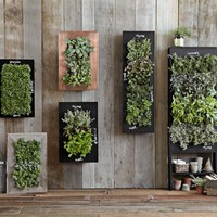 Vertical Microgreen Planter