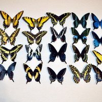 Butterfly Magnets Set of 20 butterflies Refrigerator Magnets