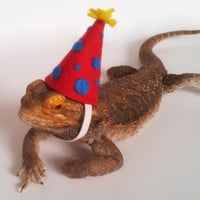 Bearded Dragon Clothing! Birthday Celebration!